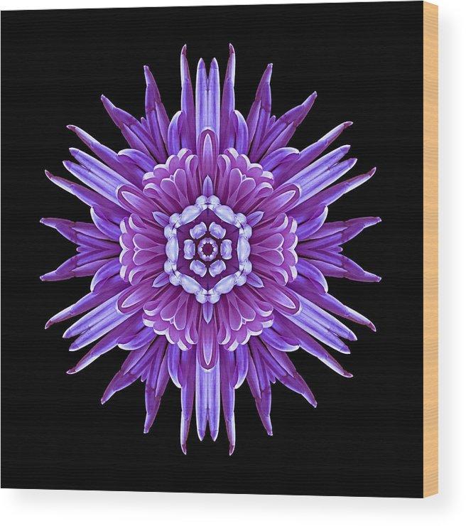 Flower Wood Print featuring the photograph Violet Chrysanthemum Iv Flower Mandala by David J Bookbinder