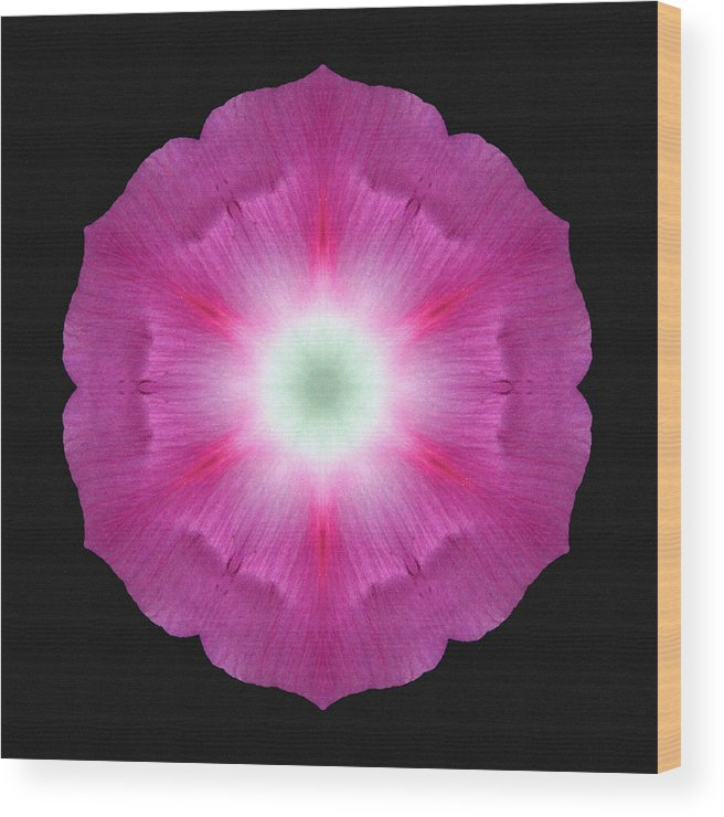 Flower Wood Print featuring the photograph Violet Morning Glory Flower Mandala by David J Bookbinder