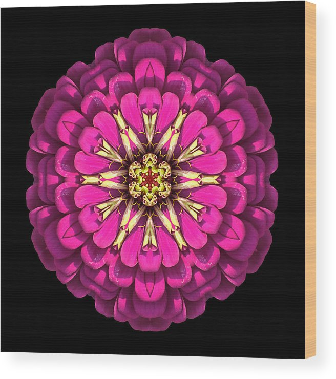 Flower Wood Print featuring the photograph Violet Zinnia Elegans Flower Mandala by David J Bookbinder