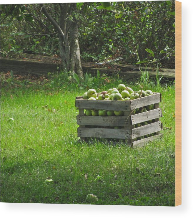 Apples Wood Print featuring the photograph Apple Picking by Rhonda Jones