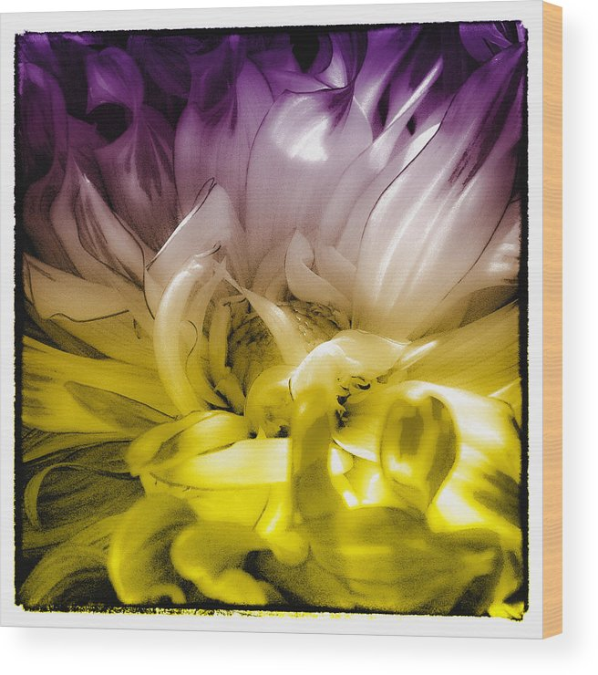 Dahlia Wood Print featuring the photograph Fantasy Dahlia by David Patterson