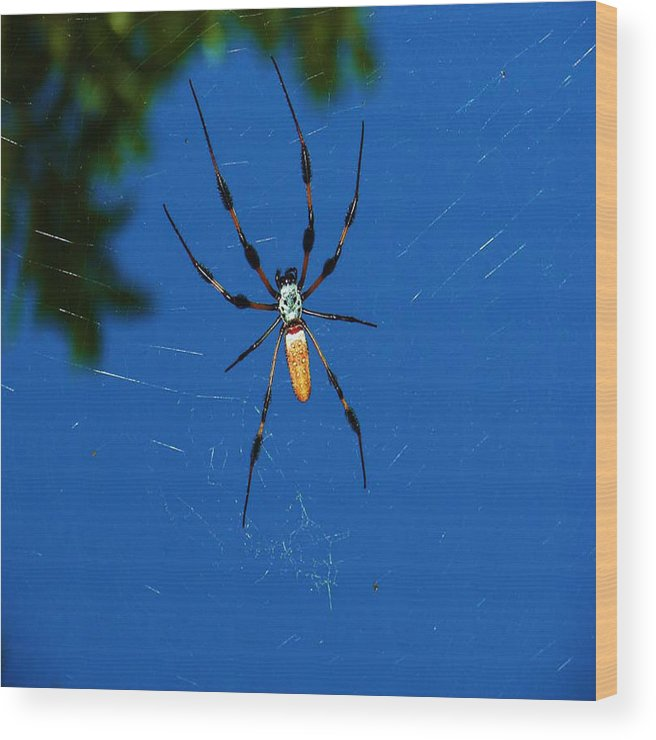 Spider Wood Print featuring the photograph Not-so Itsy-bitsy Spider by Joy Braverman