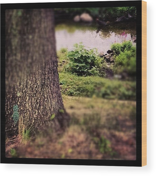 Treesofinstagram Wood Print featuring the photograph There's A Purple Flower That Caught My by Rob Murray