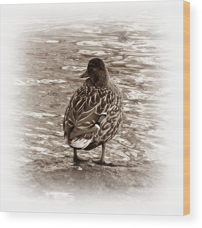 Duck Wood Print featuring the photograph Too Cold by Sharon Lisa Clarke