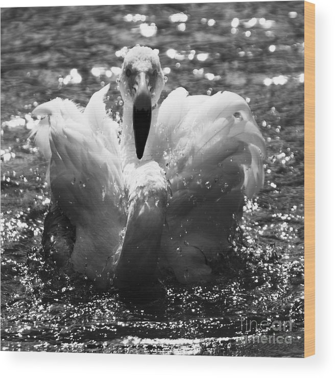 Flamingo Wood Print featuring the photograph In The Water by Angel Ciesniarska