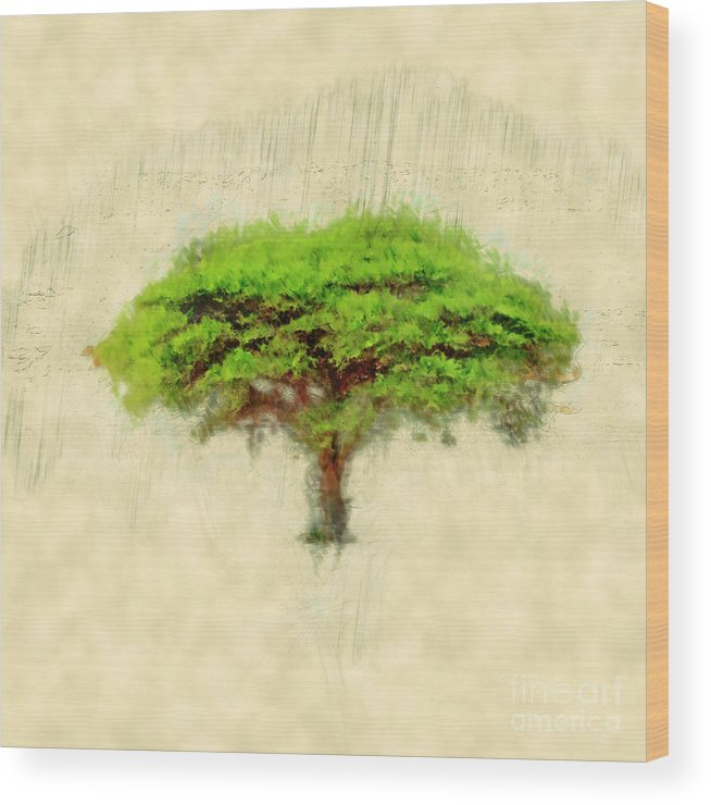 Israel Wood Print featuring the photograph Umbrella Thorn Acacia Acacia Tortilis, Negev Israel by Humourous Quotes