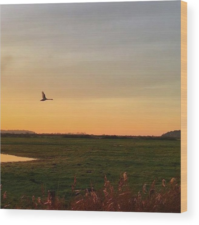 Natureonly Wood Print featuring the photograph Another Iphone Shot Of The Swan Flying by John Edwards