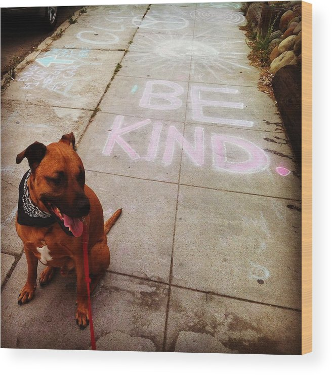 Kind Humanity Dog Love Wood Print featuring the photograph Be Kind by Sasha Kay