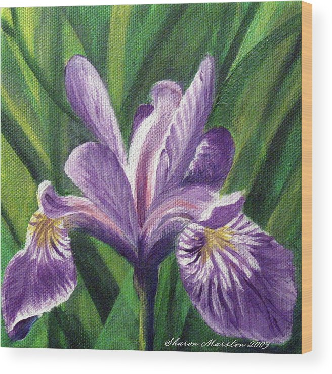 Blue Flag Iris Wood Print featuring the painting Blue Flag Iris by Sharon Marcella Marston