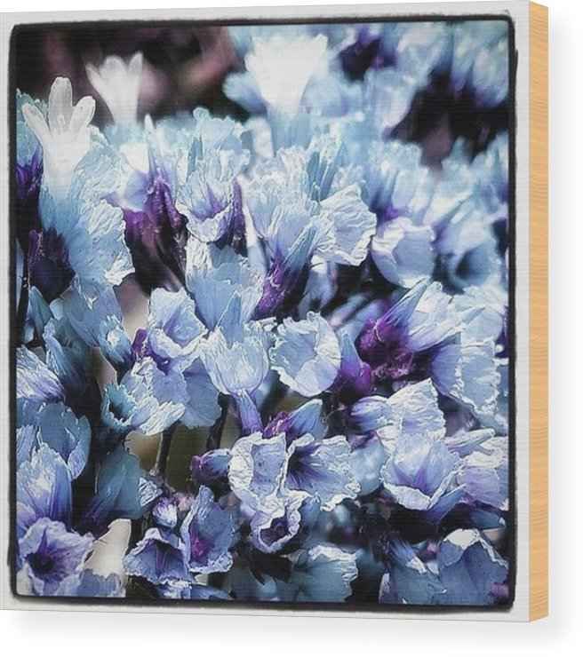 Flowerphotography Wood Print featuring the photograph Blue Melancholia. #flowerart by Mr Photojimsf