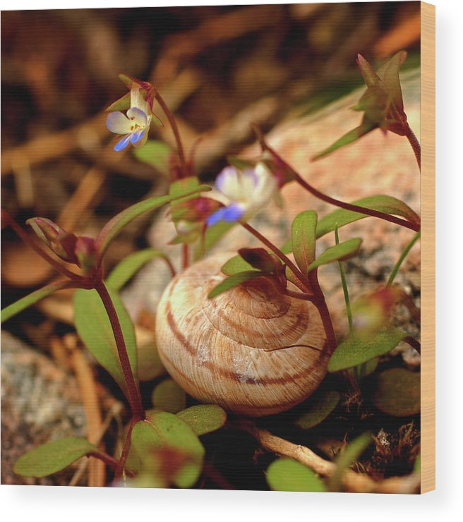 Shell Wood Print featuring the photograph Deep Beneath The Trees by Allen Lefever