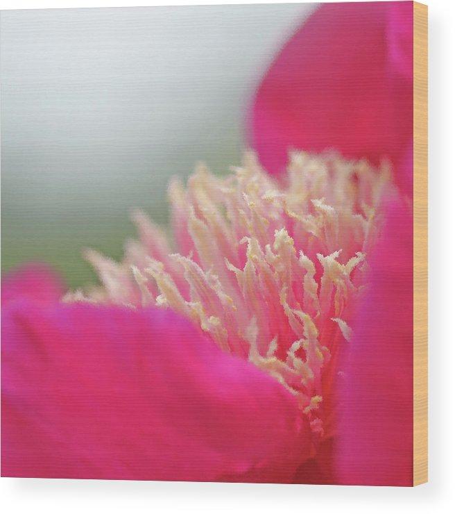 Garden Wood Print featuring the photograph Garden Flamenco II by Twenty Forever