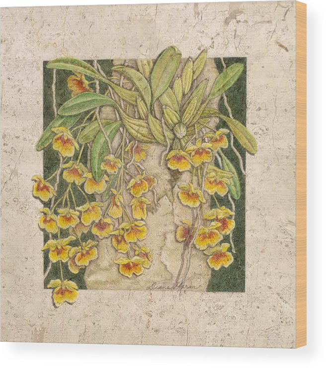 Dendrobium Orchid Wood Print featuring the painting Golden Cascade by Diane Harm