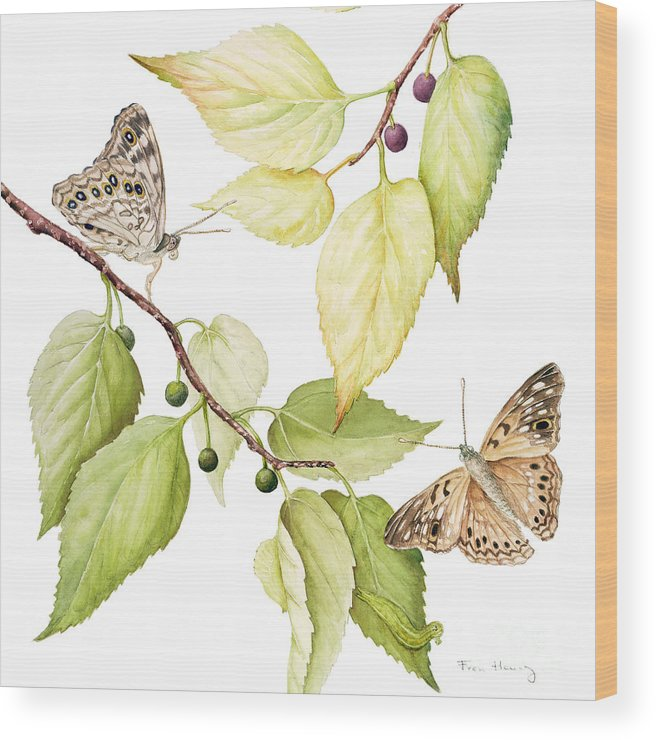 Butterfly Wood Print featuring the painting Hackberry Emperor Butterfly by Fran Henig