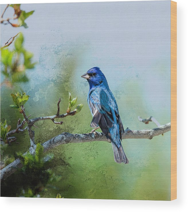 Wildlife Photography Wood Print featuring the photograph Indigo Bunting - Songbird 2 by John Bartelt