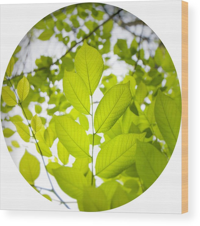 Leaves Wood Print featuring the photograph Leaves by Petersam Fahnrich