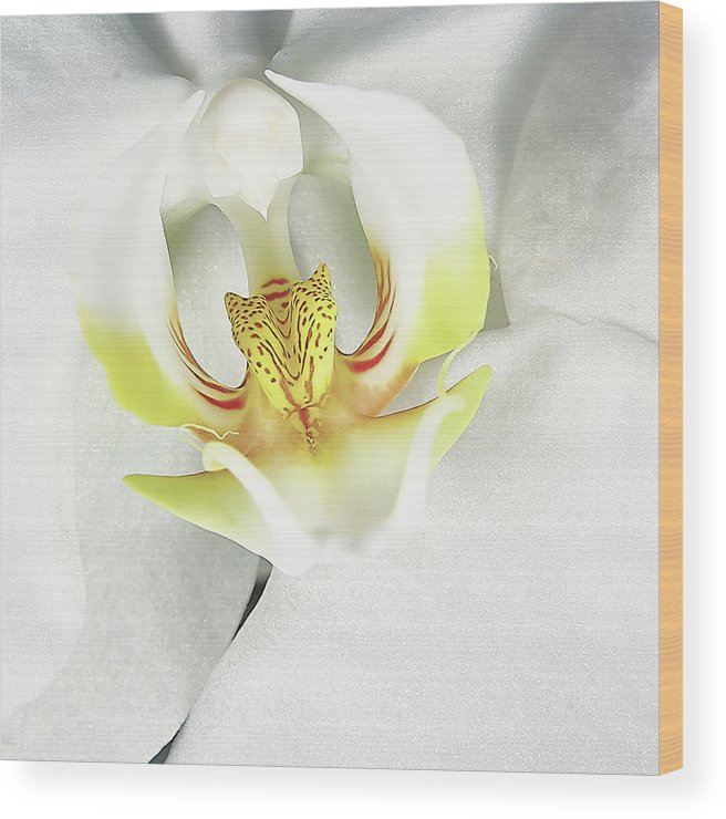 Orchid Wood Print featuring the photograph My Inner Orchid by David Hayden