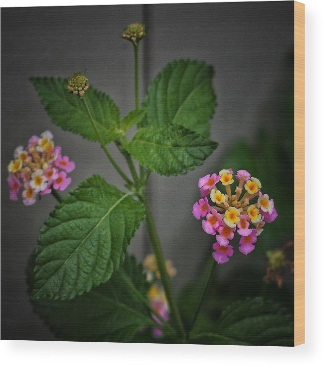 Pink Wood Print featuring the photograph Pink And Yellow Flowers by Buck Buchanan