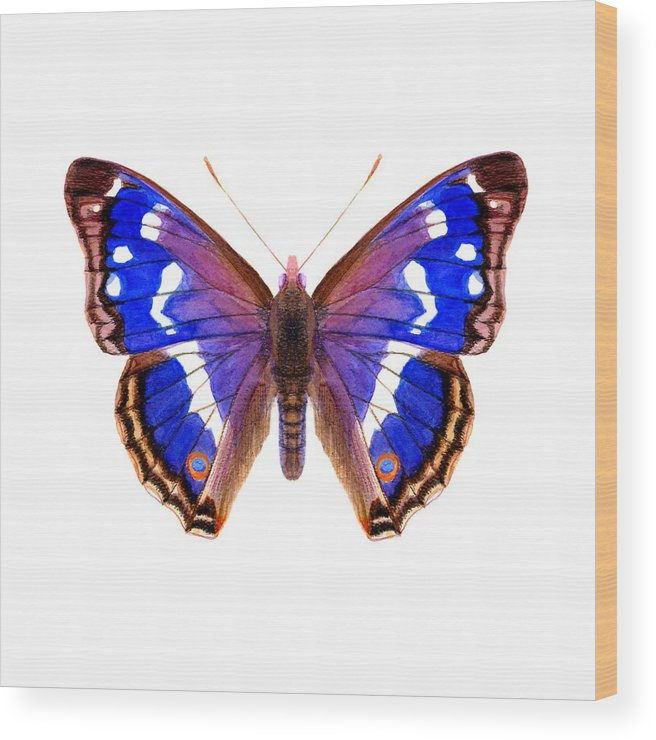 Wood Print featuring the painting Purple Emperor Butterfly by Alison Langridge