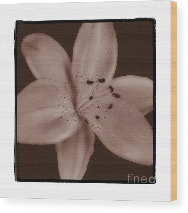 Lily Wood Print featuring the photograph Tiger Lily 8 by K Randall Wilcox