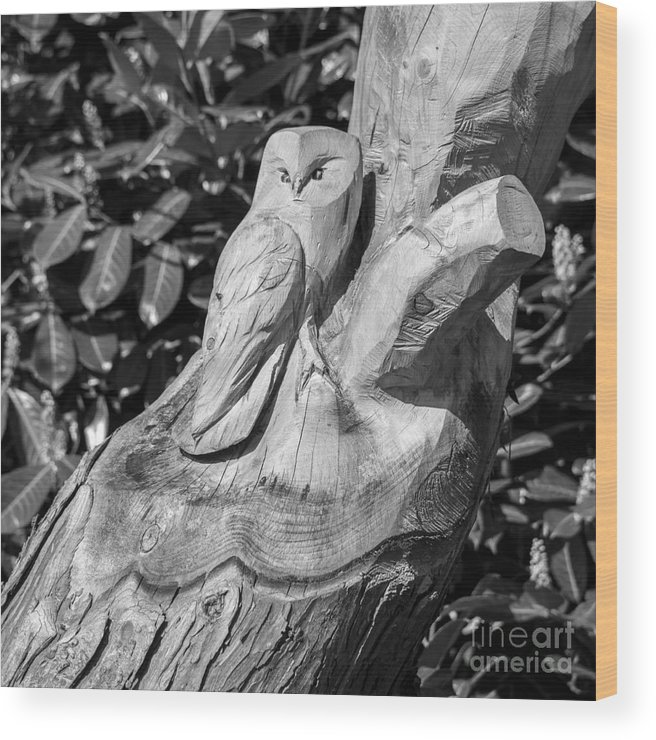 Tree Wood Print featuring the photograph Tree Owl by Rob Hawkins