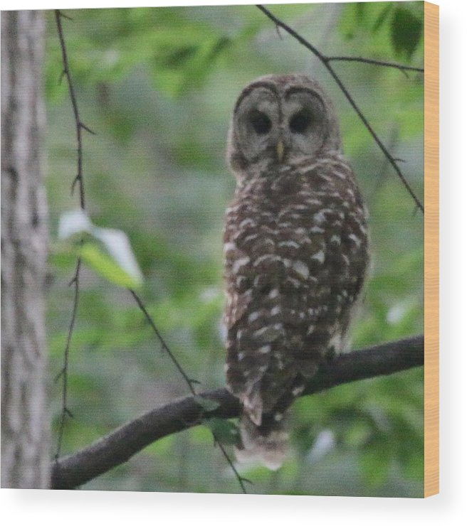 Owl Wood Print featuring the photograph Who? by Bill Helman