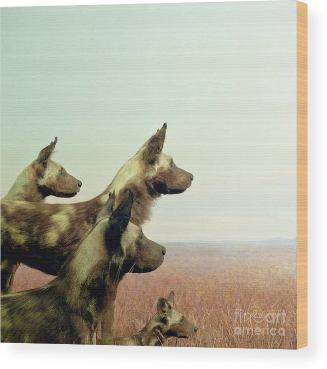 Wild Dog Wood Print featuring the photograph Wild Dog by Zena Zero