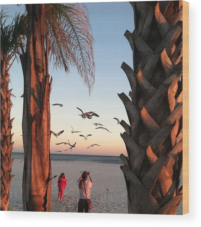 Landscape Wood Print featuring the photograph Wings Over The Palms by Christine DuMouchel