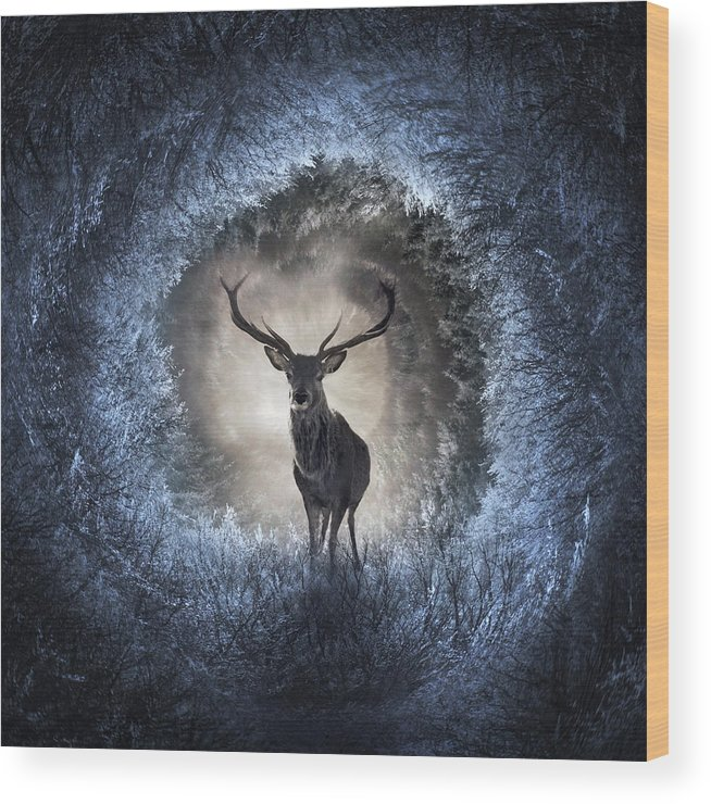 Light Wood Print featuring the digital art Winter by Zoltan Toth