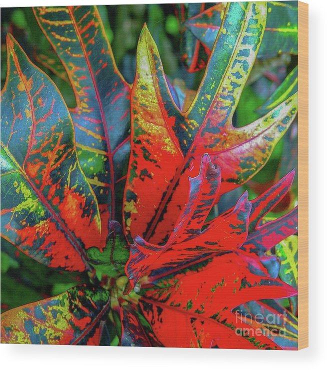 Leaf Wood Print featuring the photograph Plants And Leaves Hawaii by D Davila