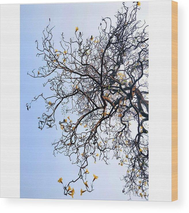 Autumn Wood Print featuring the photograph Autumn by Priya Hazra