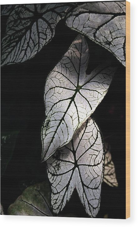 Leaves Wood Print featuring the photograph White Leaves by Alfredo Martinez