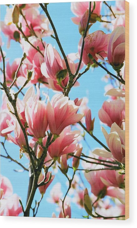 Spring Wood Print featuring the photograph Spring Blossoms by Caroline Clark