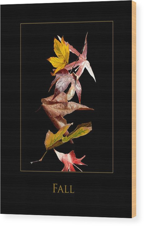 Wood Print featuring the photograph Fall by Richard Gordon