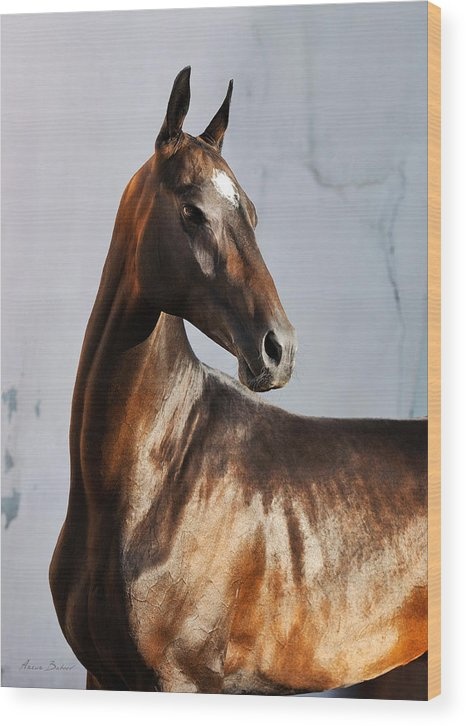 Horses Wood Print featuring the photograph Garsakh by Artur Baboev