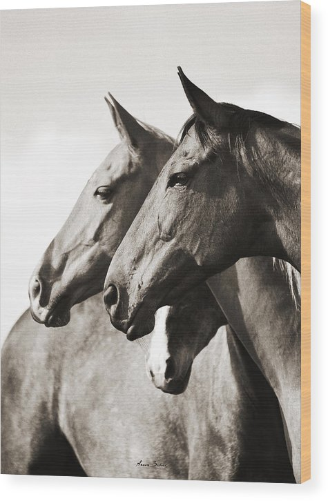 Horses Wood Print featuring the photograph Herb by Artur Baboev