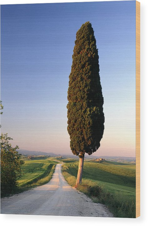 Italy Wood Print featuring the photograph Lone Cypress by Michael Hudson