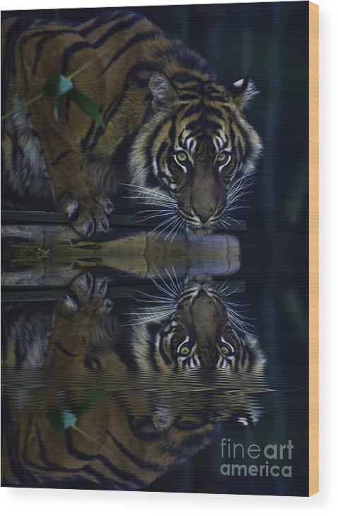 Sumatran Tiger Wood Print featuring the photograph Sumatran Tiger Reflection by Sheila Smart Fine Art Photography