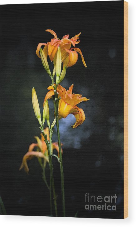 Lily Monet Garden Flora Wood Print featuring the photograph Lily in Monets Garden by Sheila Smart Fine Art Photography