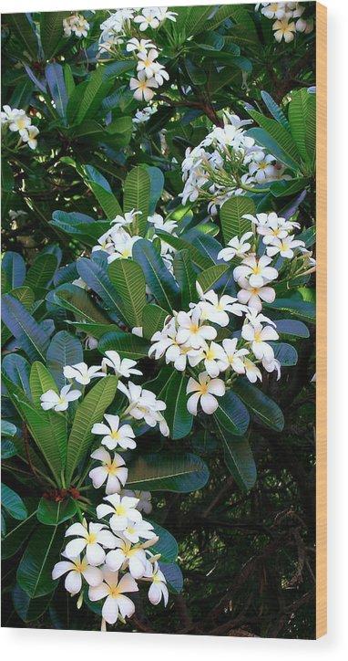 Plumeria Wood Print featuring the photograph Hawaiian Plumeria by James Temple