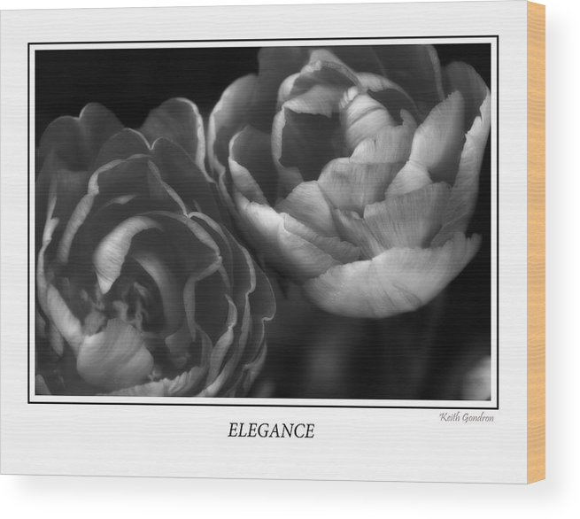Poster Wood Print featuring the photograph Elegance by Keith Gondron