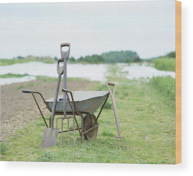Grass Wood Print featuring the photograph Gardening Tools And Wheel Barrow On by Dougal Waters