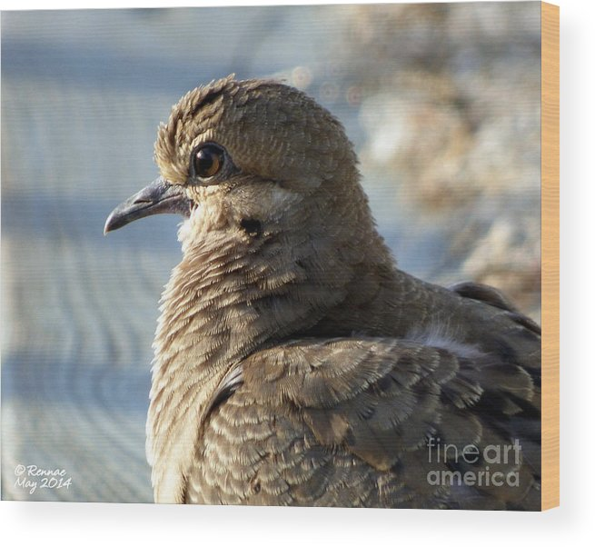 Birds Wood Print featuring the photograph The Dove by Rennae Christman