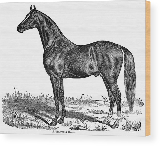 Horse Wood Print featuring the digital art Trotting Horse Engraving by Nnehring