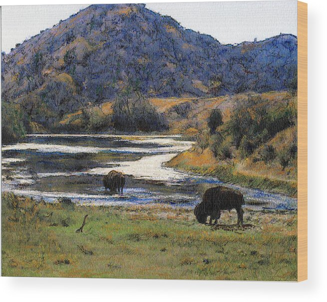 California Wood Print featuring the mixed media Catalina Buffalo SOLD by Randy Sprout