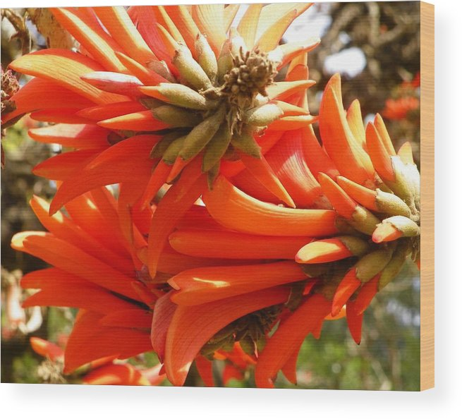 Flowers Wood Print featuring the photograph Orange Flowers1 by Evguenia Men