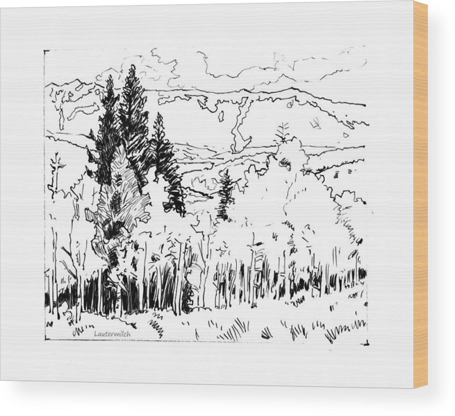 Aspens Wood Print featuring the drawing Aspens Against the Evergreens by John Lautermilch