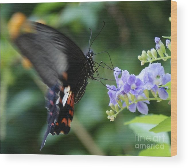 Butterfly Wood Print featuring the photograph Flying In close up by Shelley Jones