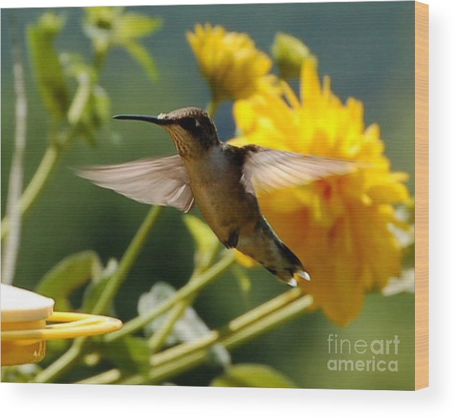 Diane Berry Wood Print featuring the photograph Hummer by Diane E Berry