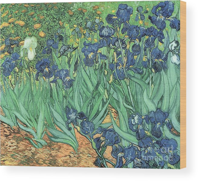 Irises Wood Print featuring the painting Irises by Vincent Van Gogh by Vincent Van Gogh